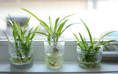 Cây trồng trong nước hay được đặt trong nhà vườn