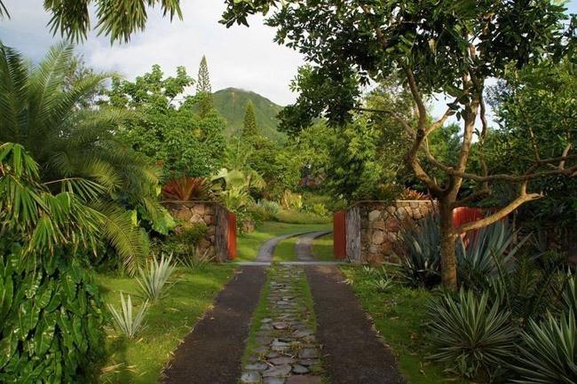 golden-rock-inn-garden-nevis-marsden-raymond-jungles-gardenista-1