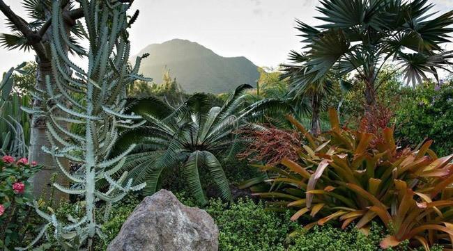 golden-rock-inn-garden-nevis-marsden-raymond-jungles-gardenista-4