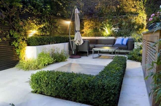 trồng những kiểu hàng rào thấp như thế này trong khuôn viên hạn hẹp
