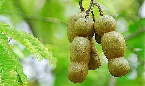 Cây me là loại cây ăn quả