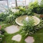 Chum nước trong Starlight garden