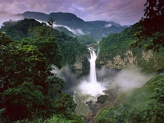 Cảnh quan xanh trong rừng mưa Amazon