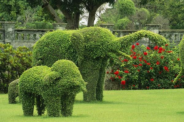 một chú voi con và voi mẹ đang dạo chơi trong vườn
