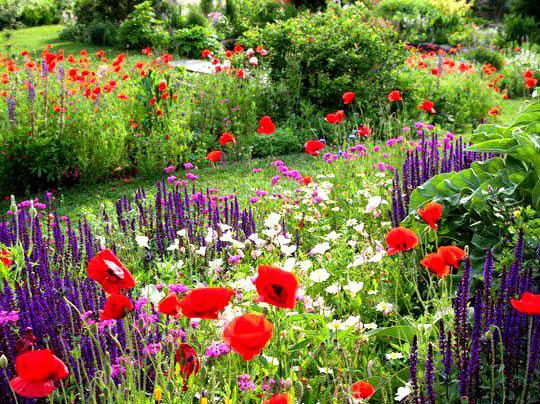 vườn tuyệt đẹp đến hoàn hảo