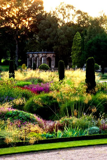 thảo cỏ dày đặc trong sân vườn