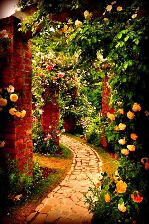 hoa hồng leo đa sắc màu làm sân vườn đẹp hơn