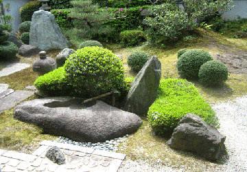 Cỏ Nhật được trồng làm nền cho khu vườn.