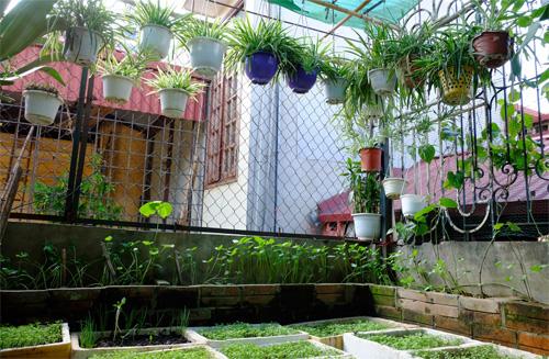 Vườn cây treo trên mái xanh mướt