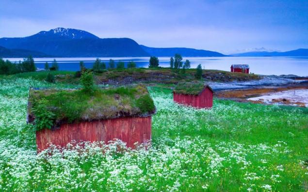 Mái cỏ giữa cánh đồng hoa ở Tysfjord, Na Uy trông thật giản dị và bình yên