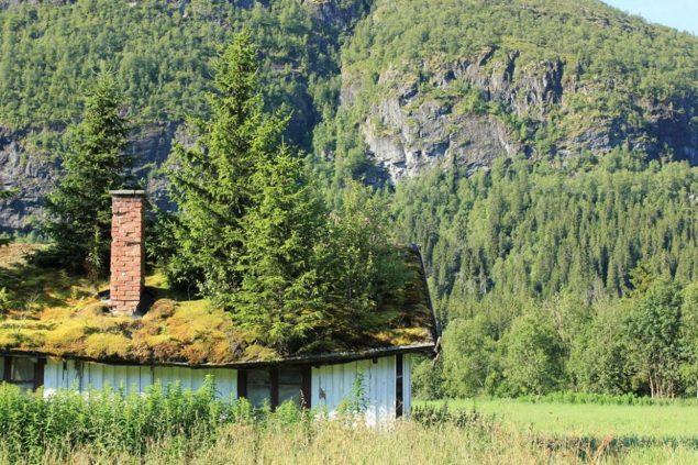 Cánh rừng mọc trên nóc nhà ở Na Uy