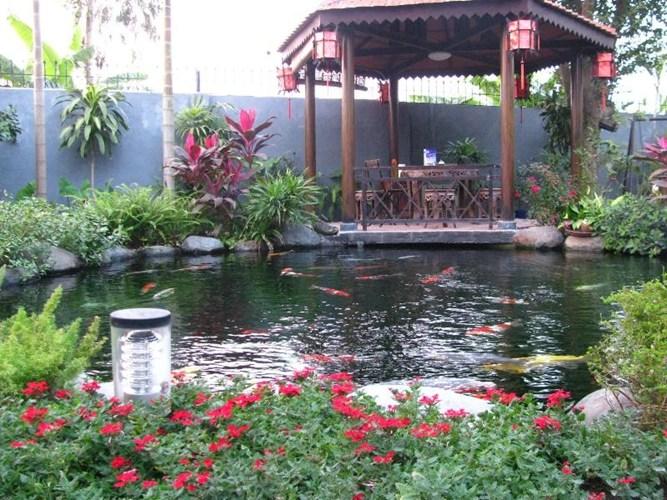 Những lưu ý khi xây dựng một bể cá koi trong vườn-2