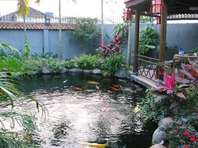 Những lưu ý khi xây dựng một bể cá koi trong vườn