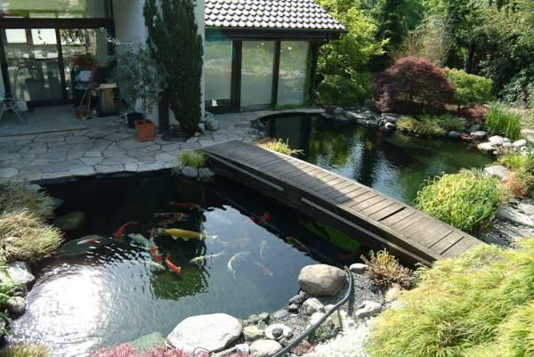 Hồ cá koi tại Nhật Bản